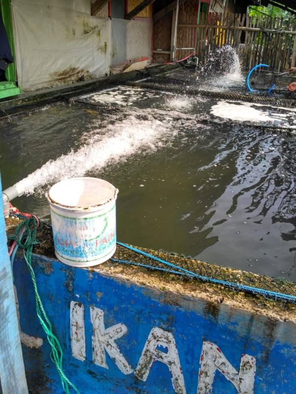 Tempat penjualan ikan nila